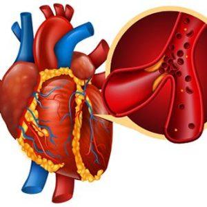 Endothelium Barrier Function Helps Mitigate Metastasis